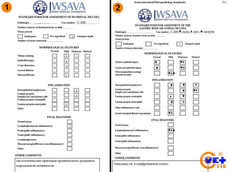 Формы для оценки слизистой двенадцатиперстной кишки, тела и антрального отдела желудка