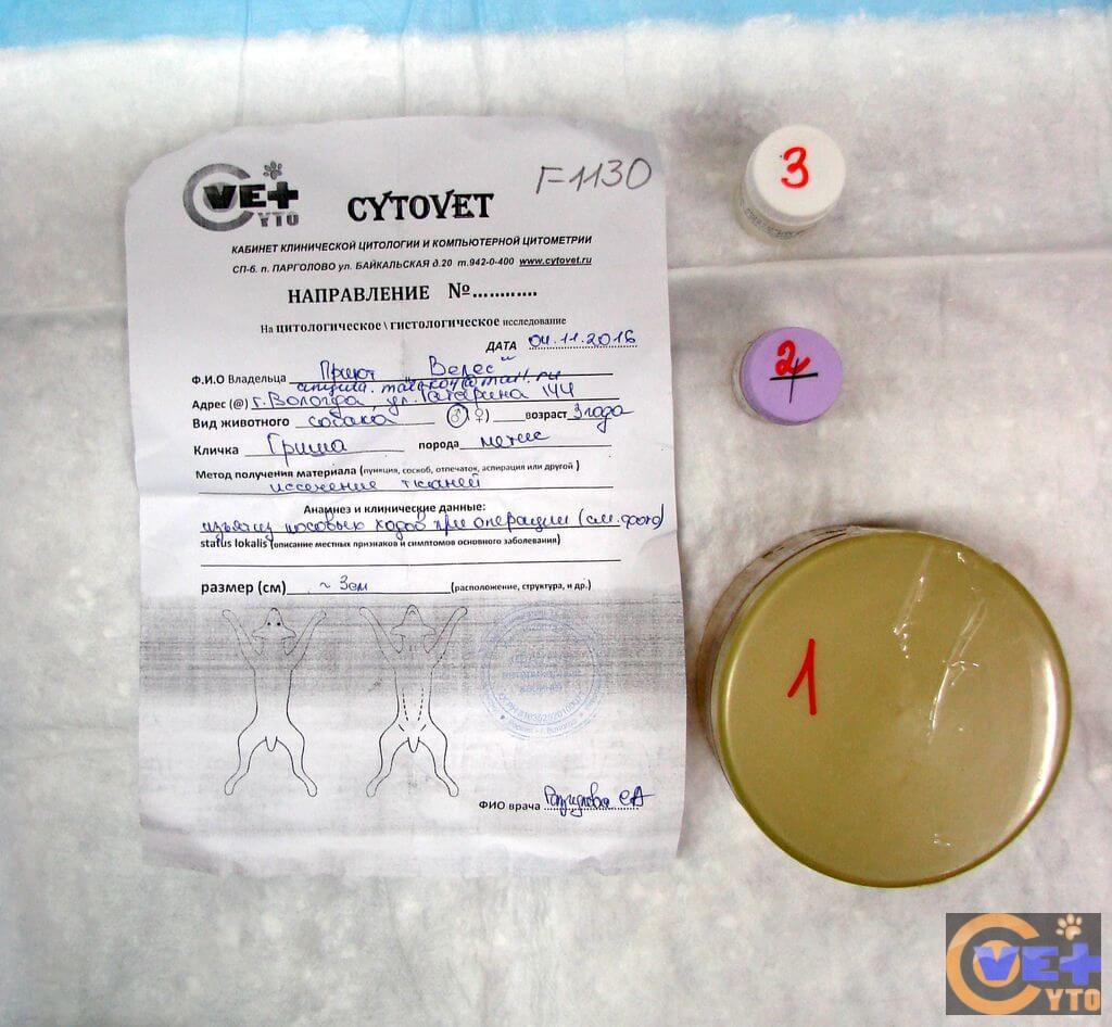 Пересылка патологического материала в CYTOVET