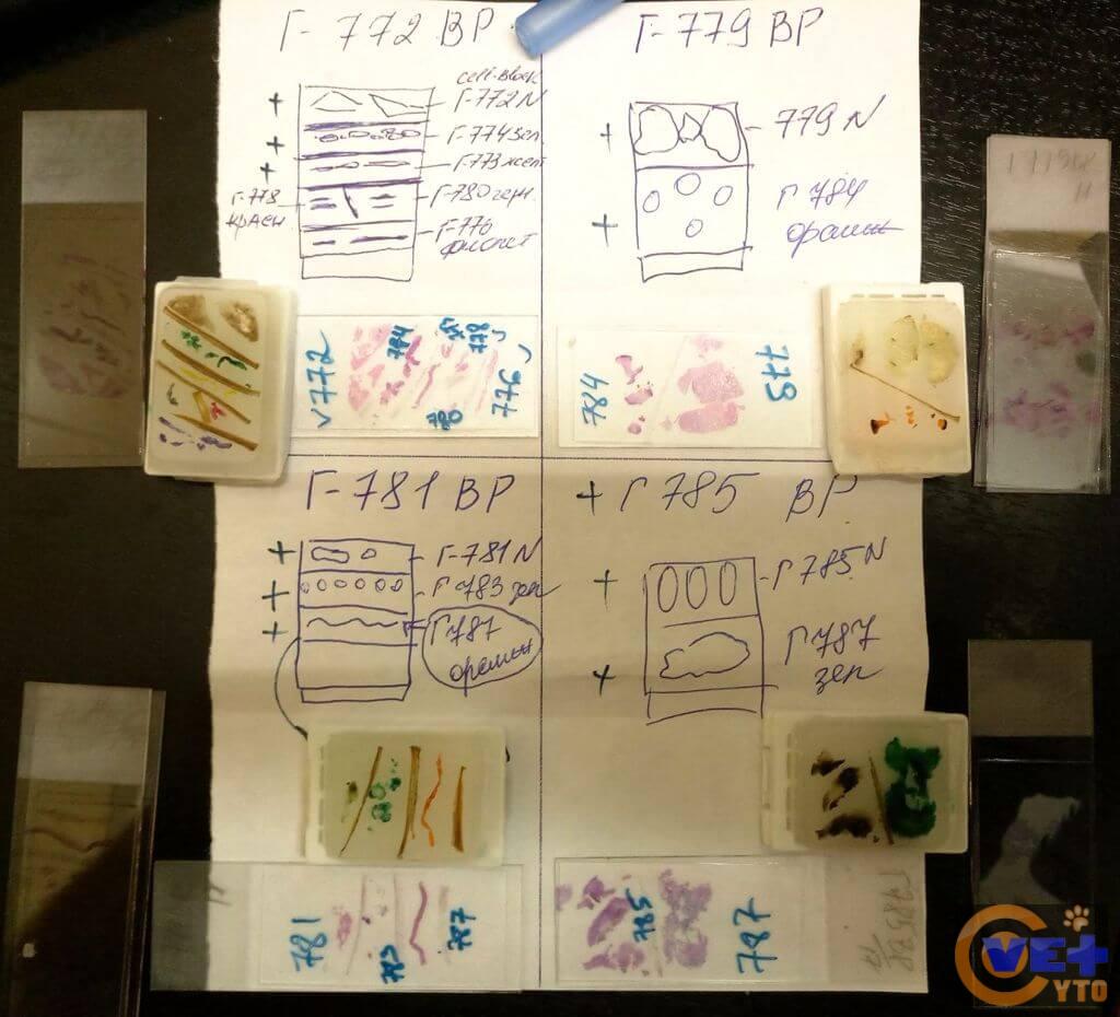 Схема расположения образцов