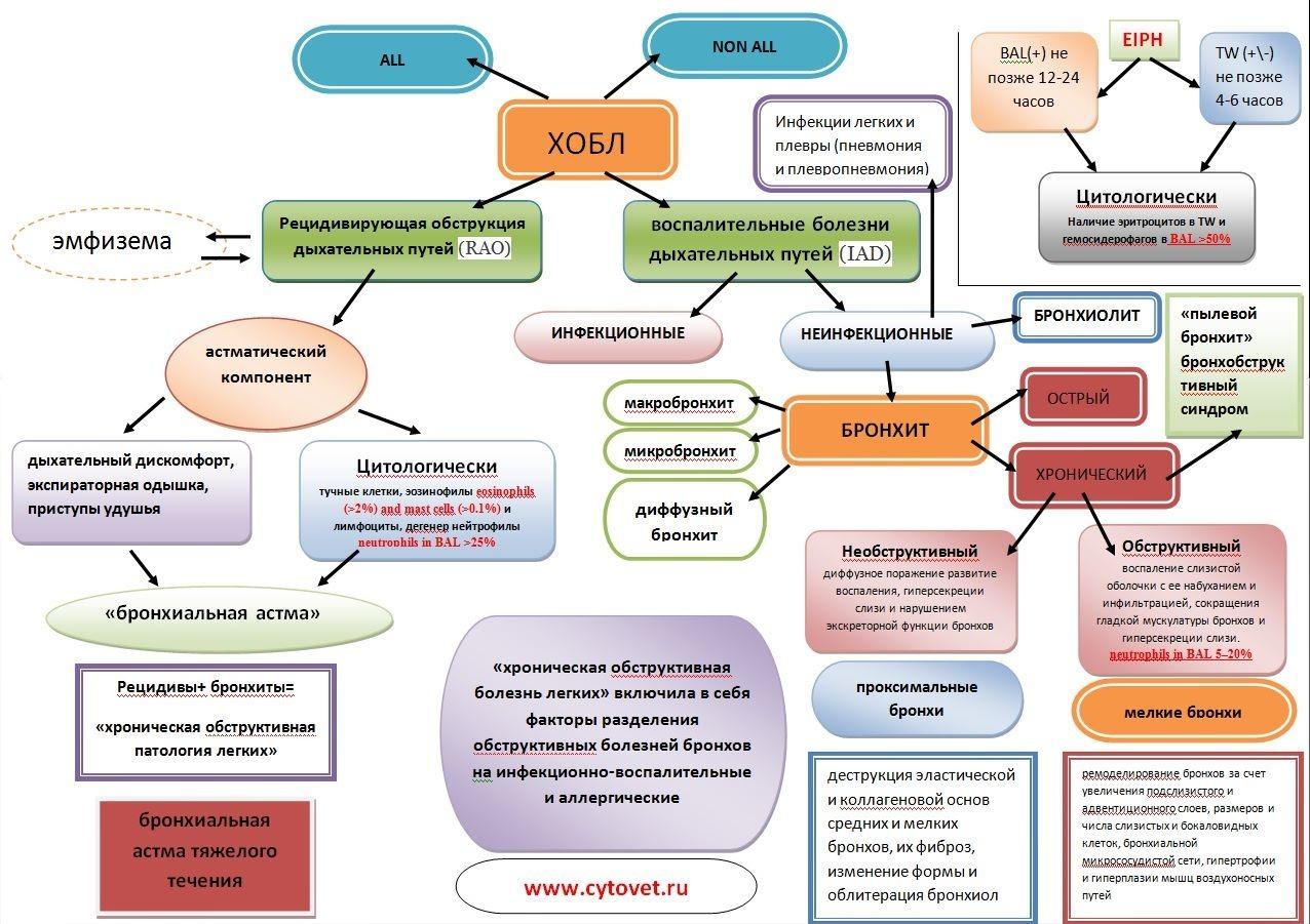 Цитология бронхоальвеолярного лаважа лошадей (инфографика)