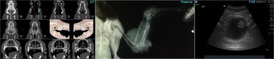 Tietokonetomografia, rontgen, ultraaanitutkimus